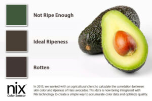 An avocado is cut open. Three swatches show colours that indicate if the fruit is not ripe enough, at ideal ripeness, or is rotten.